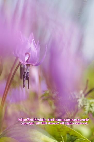 dancing flower01.jpg