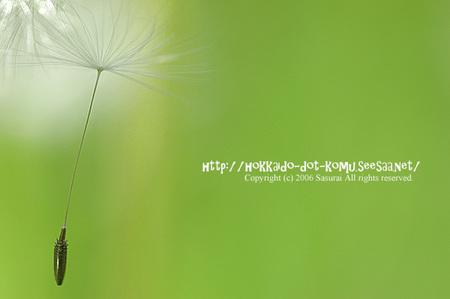 flying seed.jpg