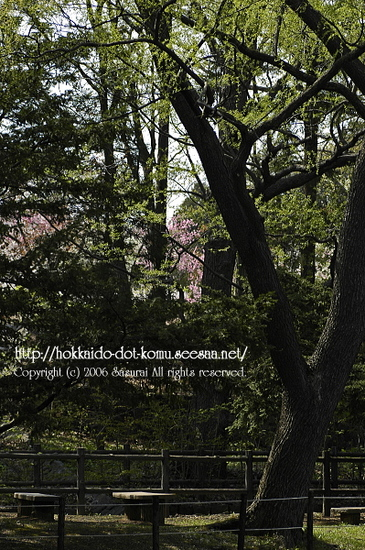 sakura_afternoon.jpg